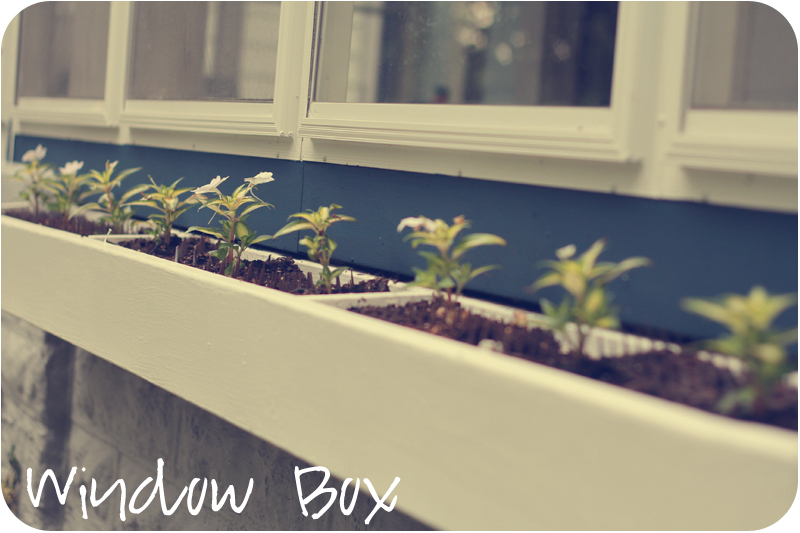 window box with Sunpatiens