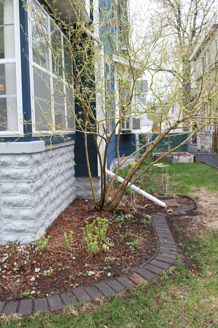 Pavers in the Front Foundation Garden