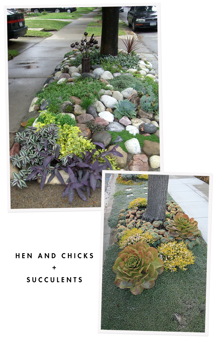 Succulents on the Hellstrip