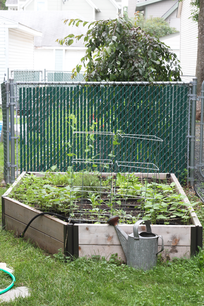 Our Raised Bed Garden is Growing