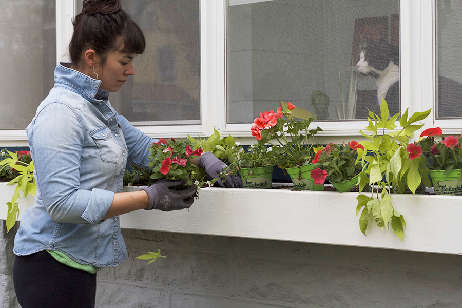 How to Plant Window Box & Container Gardens