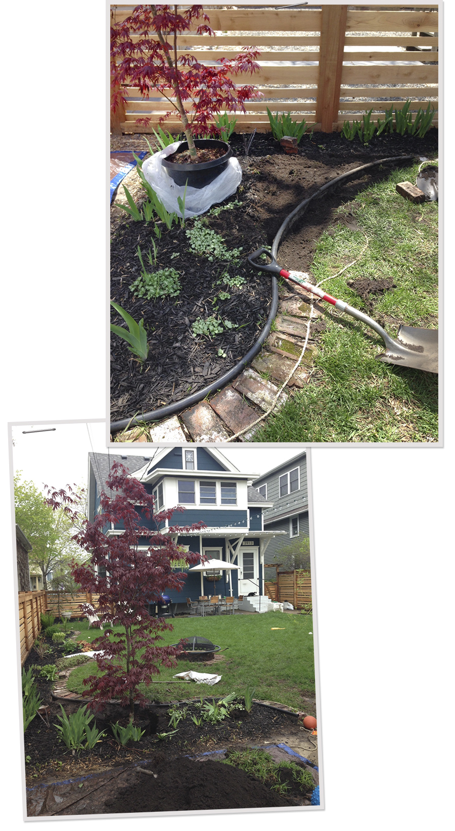 Adjusting the Border and Digging a Hole for our Japanese Maple