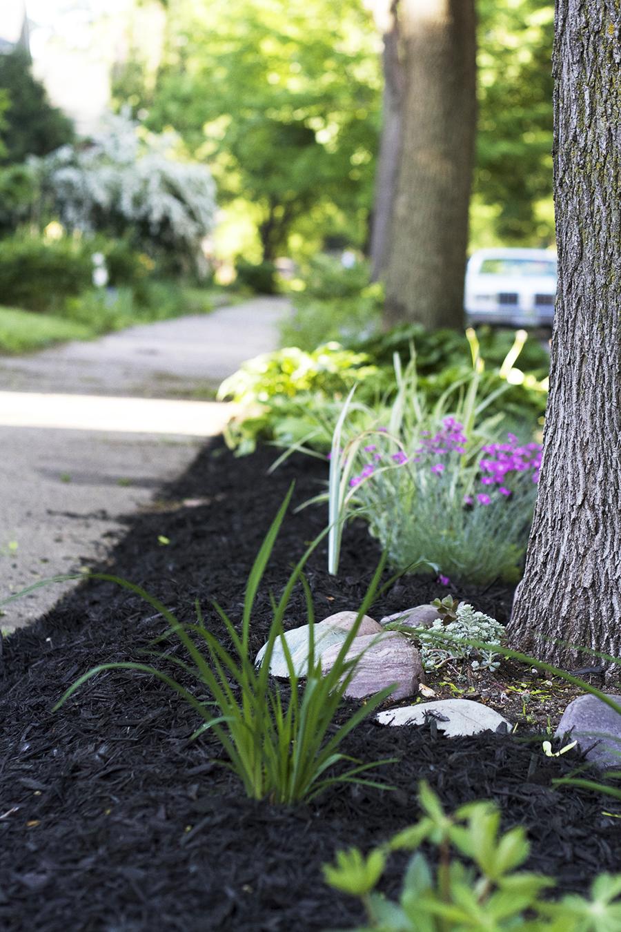 Midwestern Boulevard Garden