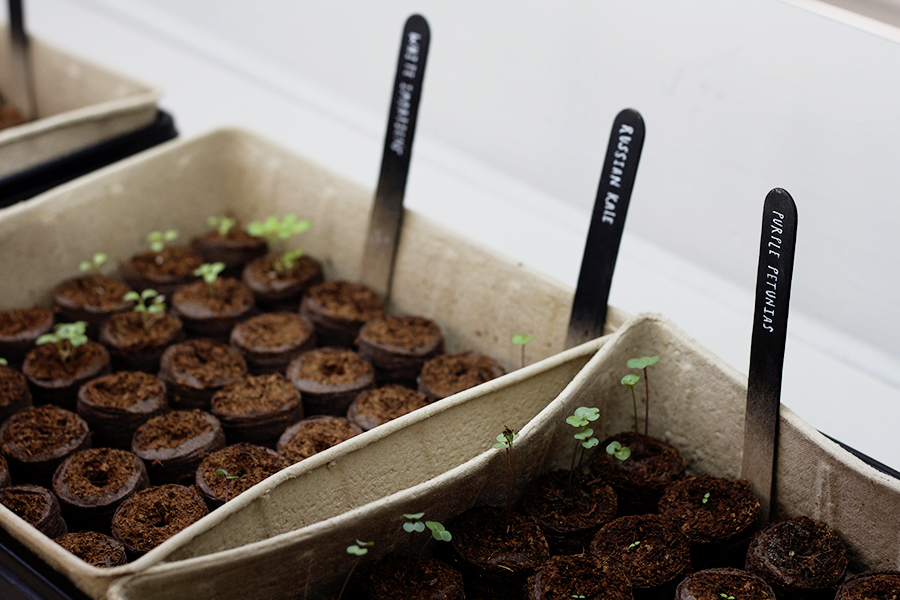 Sowing Seeds Indoors