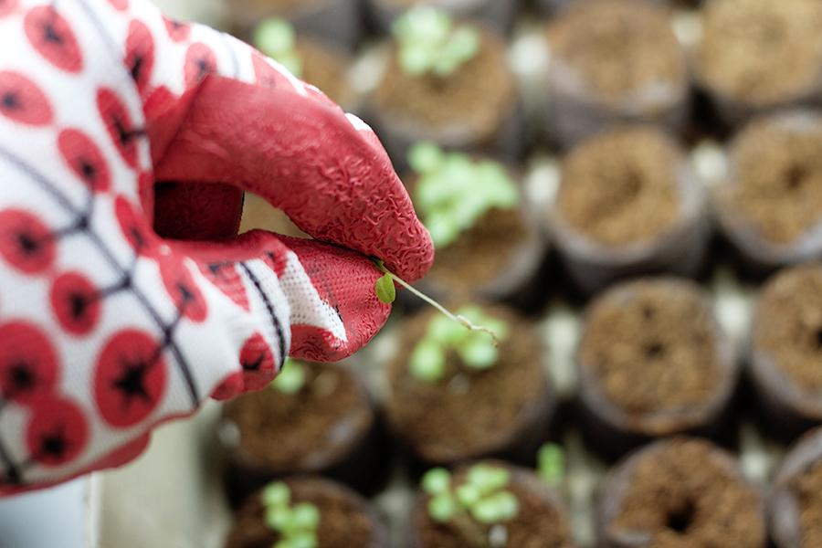Sowing Seeds Indoors