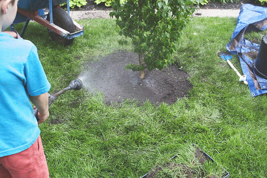 How to Plant a Tree | Deuce Cities HenHouse