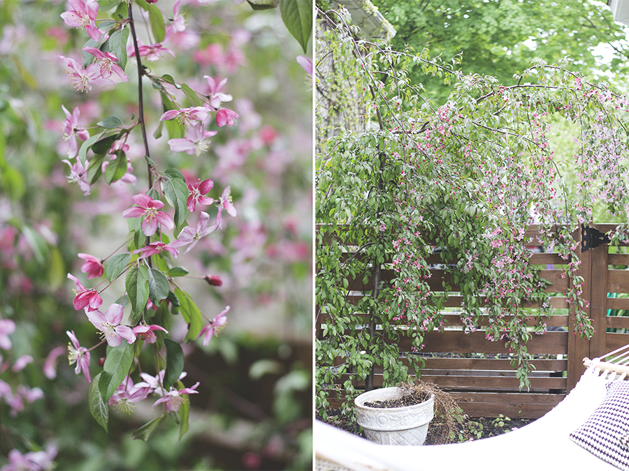 My May Garden | Deuce Cities Henhouse