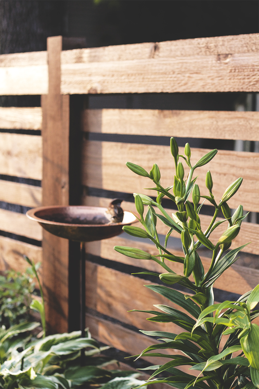 My May Garden | Deuce Cities Henhouse