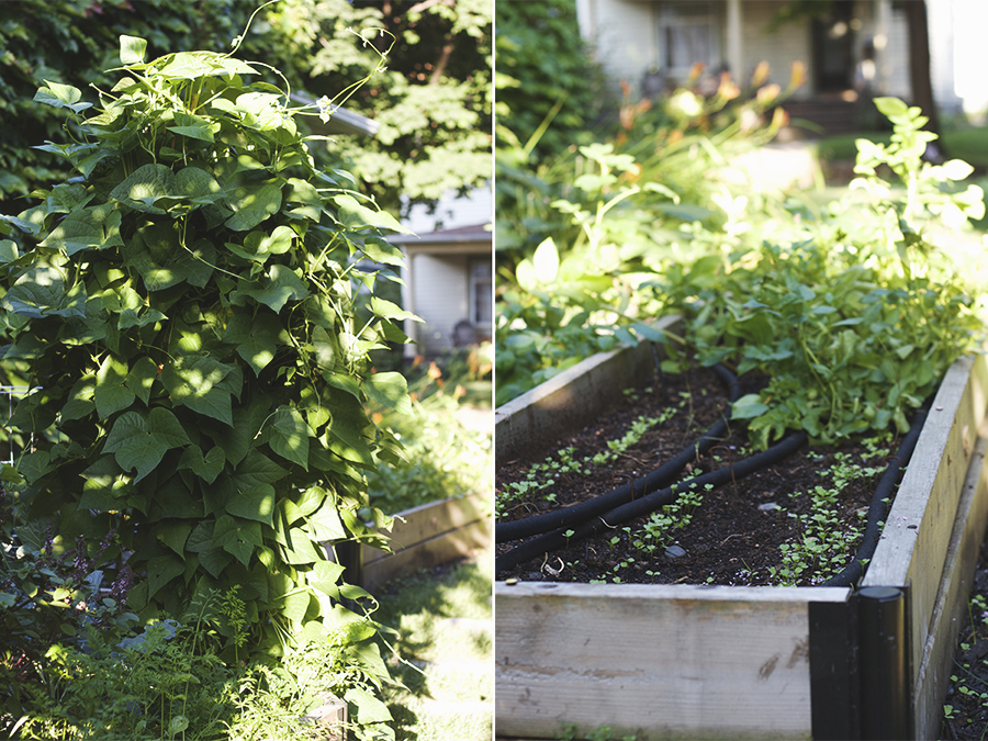 My July Garden | Deuce Cities Henhouse