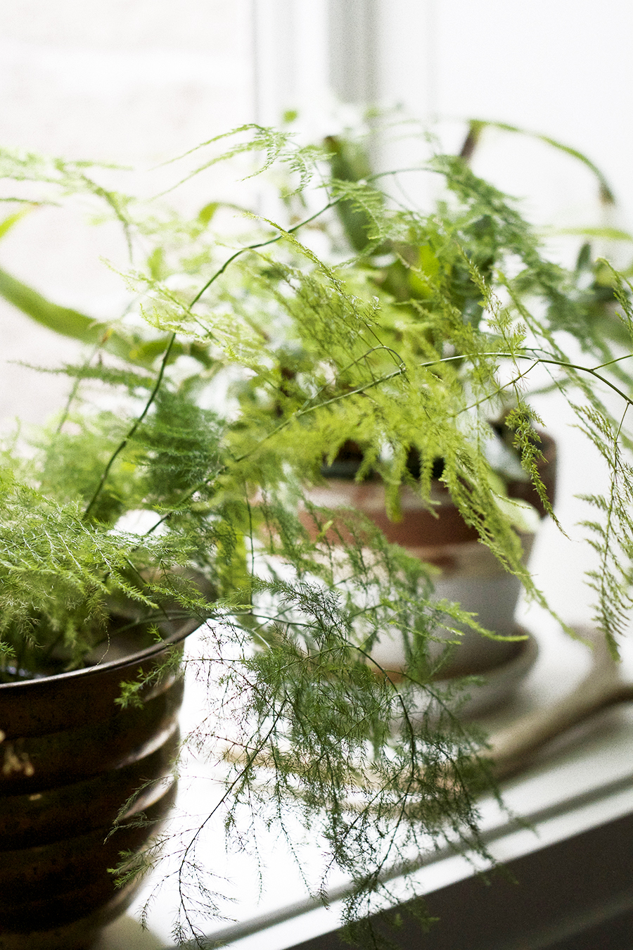Plants Rule