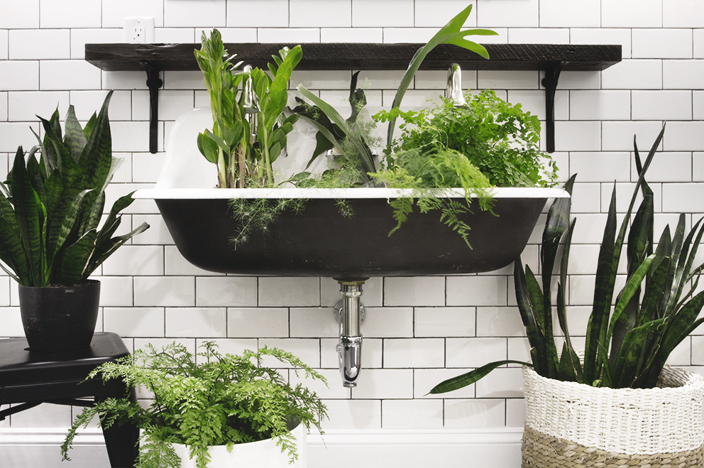 Bathroom Plants Part - 33: Ideal Plants For The Bathroom