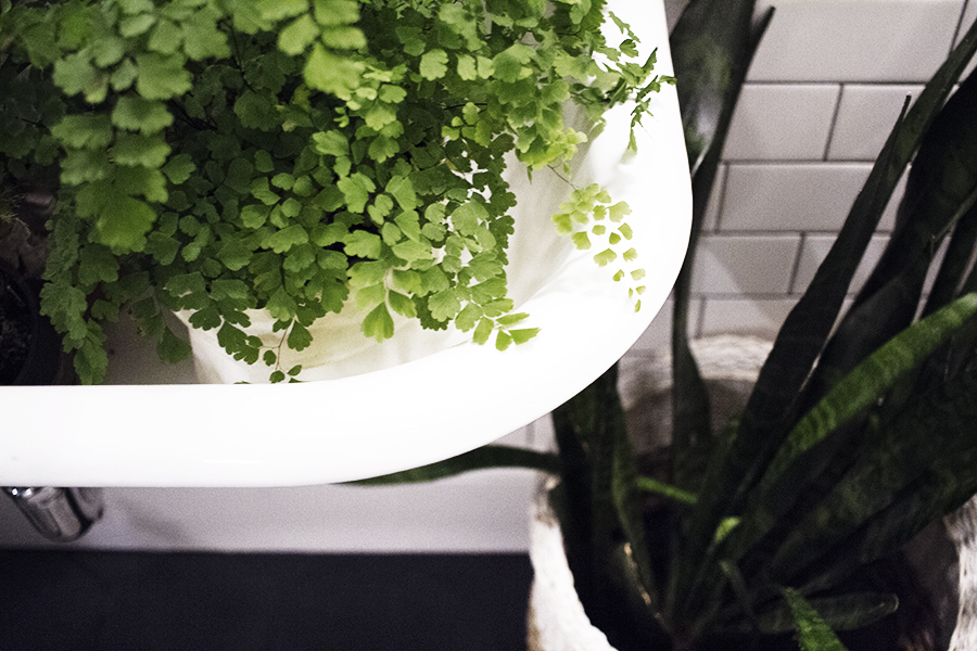 Ideal Plants for the Bathroom