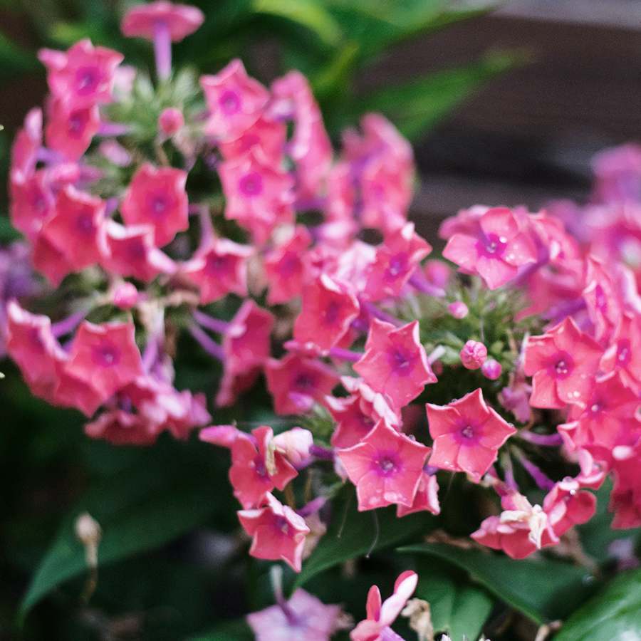 Plants for a sunny border garden | Deuce Cities Henhouse