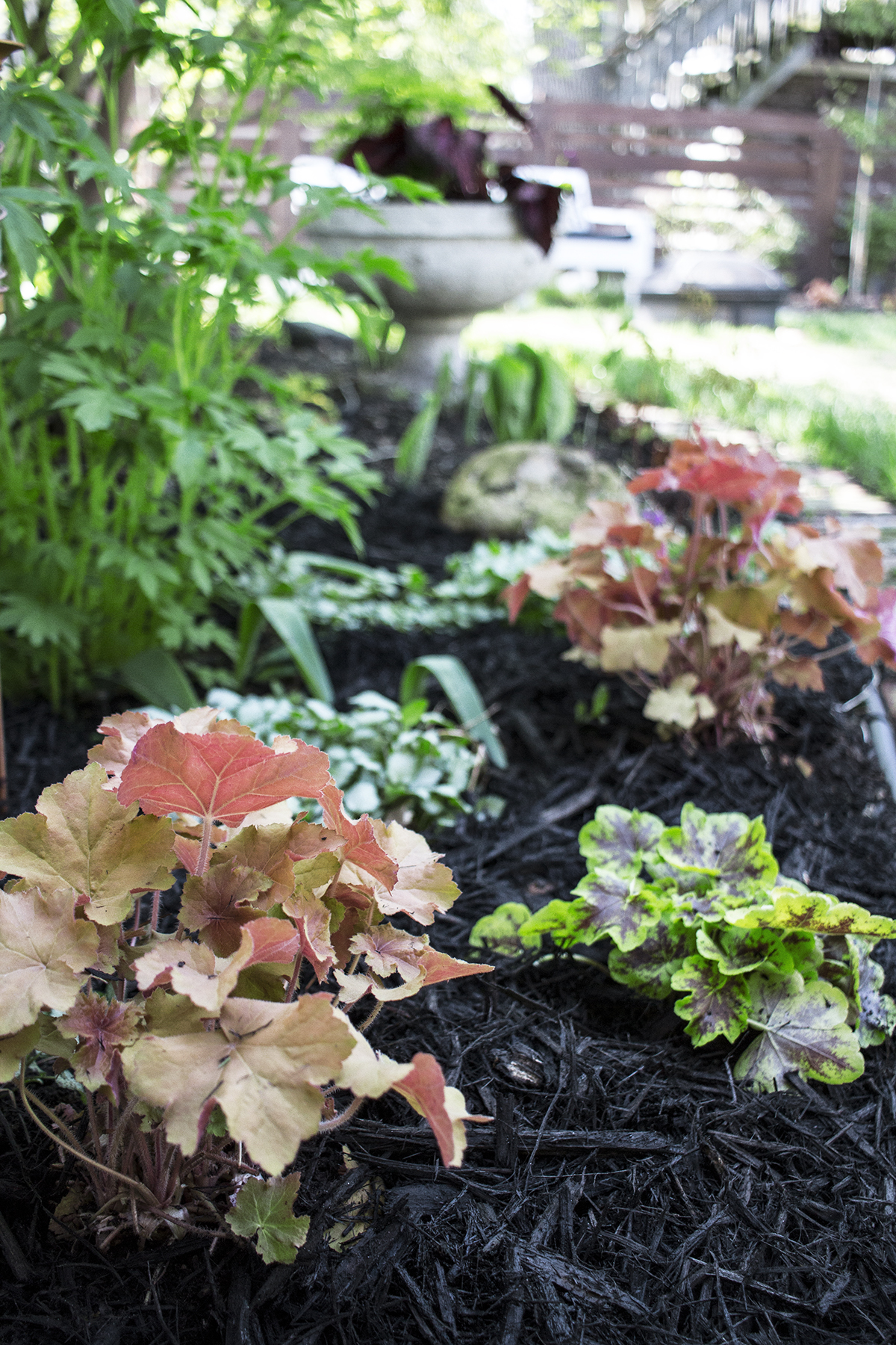 Adding Color to the Garden with Monrovia | Deuce Cities Henhouse
