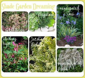Planning for my Shady Boulevard Garden.