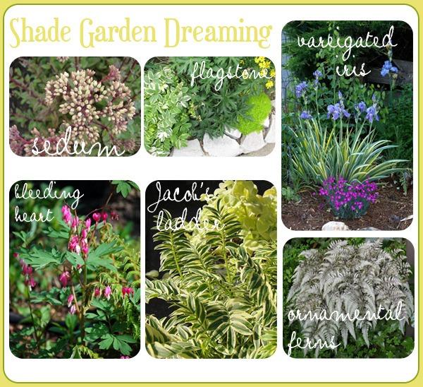 Planning for my Shady Boulevard Garden.