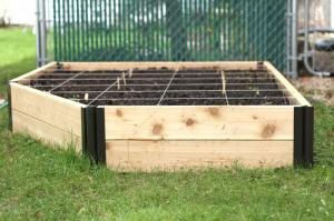Veggie Garden Update