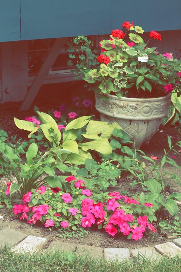 My August Garden