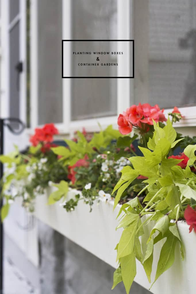 How To Plant a Window Box or Container Garden