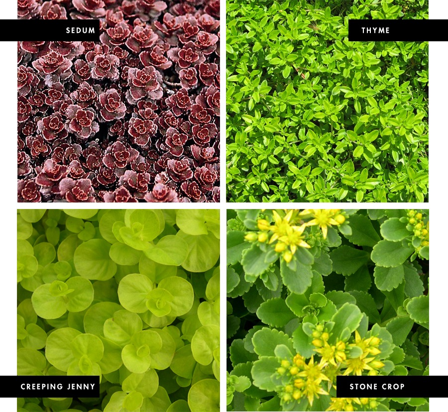 Using natural ground cover as mulch and garden edging