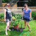 Gardening Basics : Dividing Perenni...