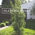How to Plant a Tree - Instructions