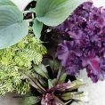 Tips for Choosing Foundation Garden...