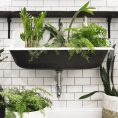 Three Plants that Thrive in Low Lig...