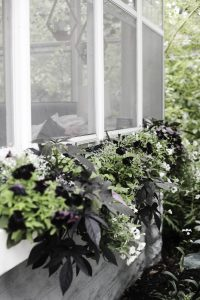 No Touch Smart Watering System for your window boxes, planters and lawn